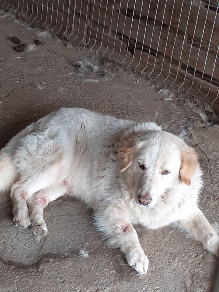 BALANUCH, mâle croisé berger sauvé de Pallady, né en 2009 parrainé par Nathalie G. -Gage Coeur  Myri_Bonnie-SC-R-SOS- - Page 3 10355711