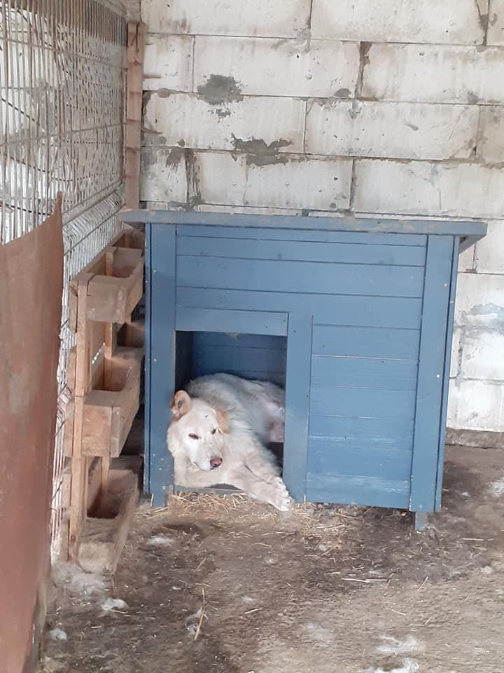 BALANUCH, mâle croisé berger sauvé de Pallady, né en 2009 parrainé par Nathalie G. -Gage Coeur  Myri_Bonnie-SC-R-SOS- - Page 3 10415510