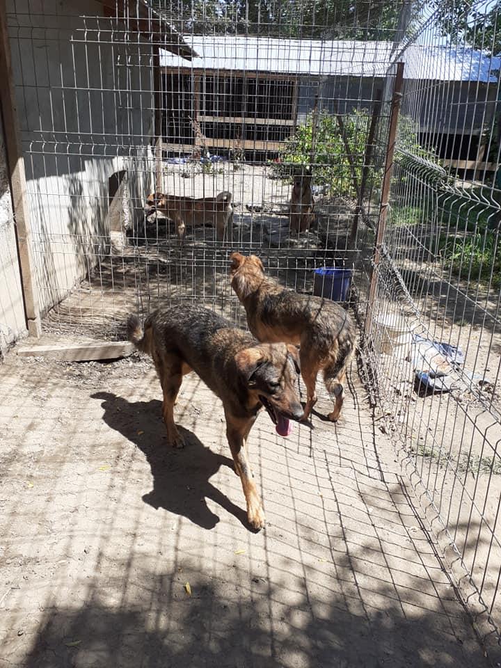NAMI, croisé berger, soeur de Taliya et Ouzo, trouvée dans la rue en mai 2018- marrainée par Guyenne -R- - Page 2 10619811
