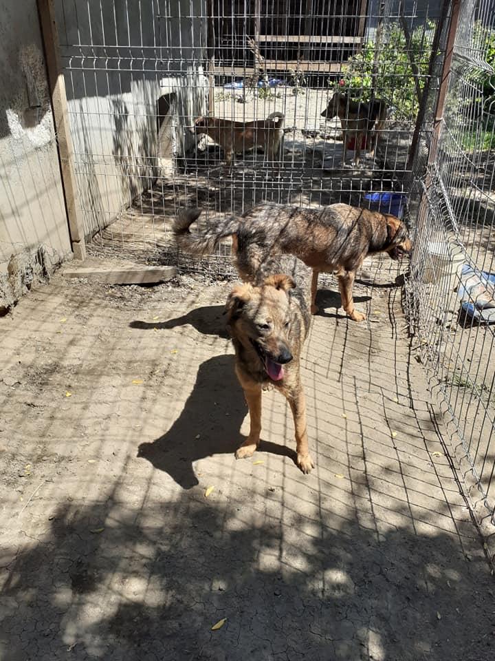 OUZO, né en sept 2017,  croisé berger, frère de Taliya et Nami, trouvé dans la rue en mai 2018 - Parrainé par Viviane -R- - Page 2 10621710