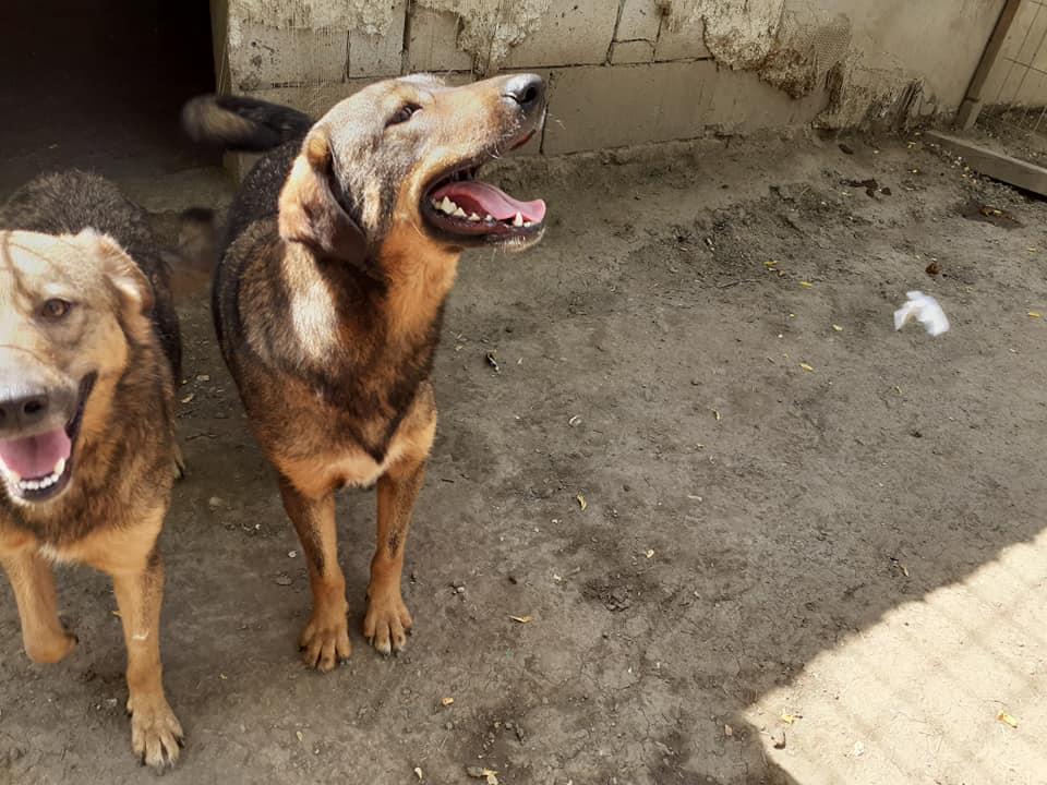 OUZO, né en sept 2017,  croisé berger, frère de Taliya et Nami, trouvé dans la rue en mai 2018 - Parrainé par Viviane -R- - Page 2 10636710
