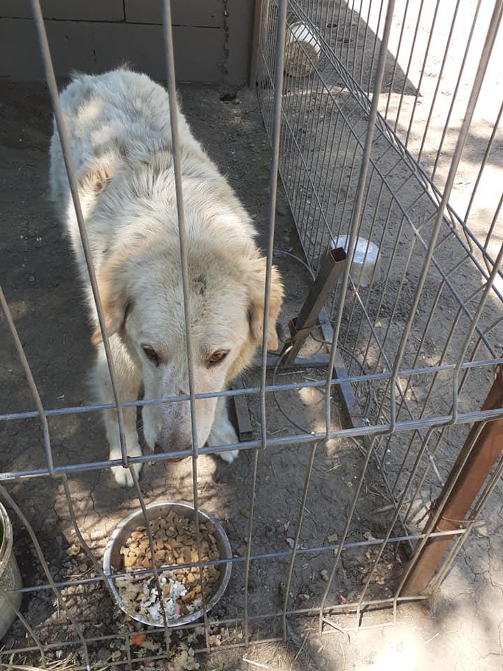 BALANUCH, mâle croisé berger sauvé de Pallady, né en 2009 parrainé par Nathalie G. -Gage Coeur  Myri_Bonnie-SC-R-SOS- - Page 3 10641010