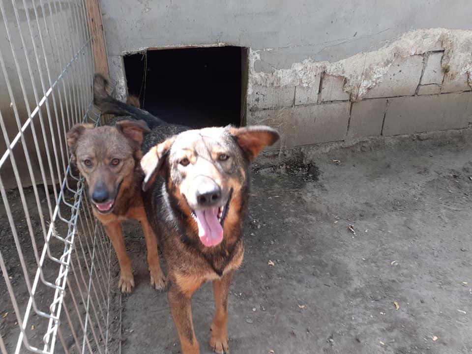 NAMI, croisé berger, soeur de Taliya et Ouzo, trouvée dans la rue en mai 2018- marrainée par Guyenne -R- - Page 2 10645311