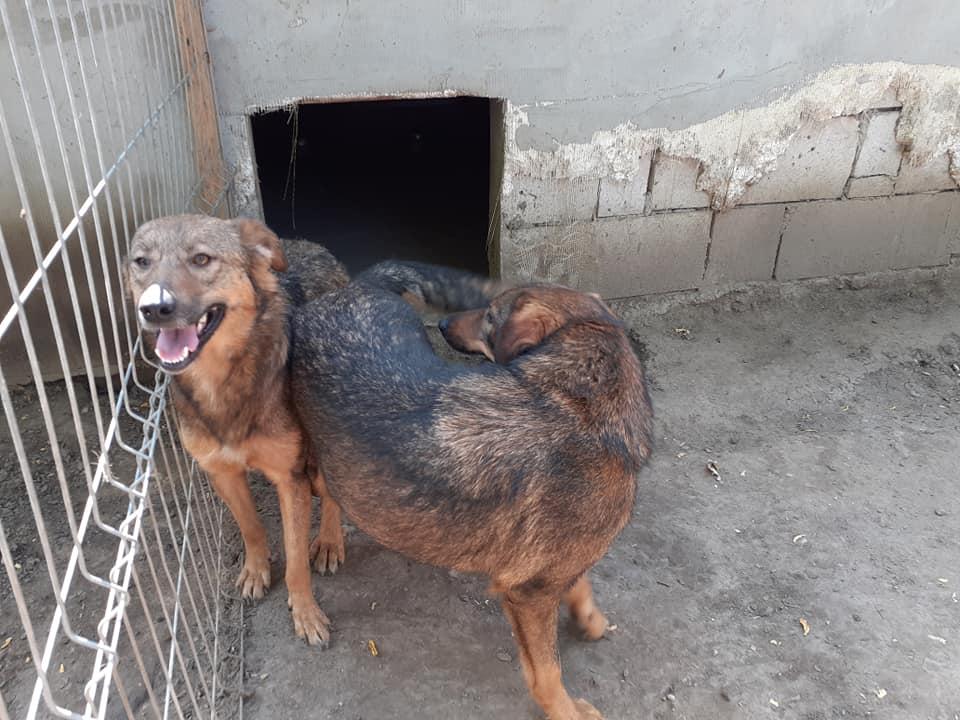 OUZO, né en sept 2017,  croisé berger, frère de Taliya et Nami, trouvé dans la rue en mai 2018 - Parrainé par Viviane -R- - Page 2 10647710