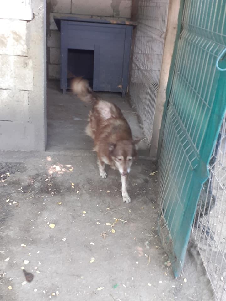LAORA, femelle rescapée d'Oltenita du 30 avril 2015, née fin 2013, marron roux - marrainée par lilirez2 - SOS-R-SC - Page 3 10648210