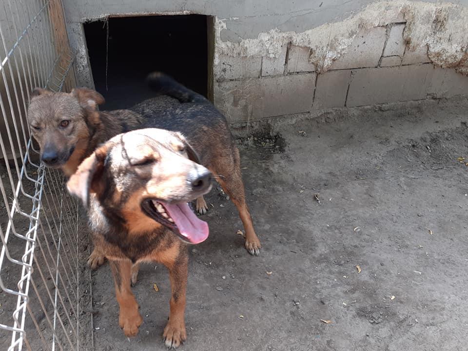 OUZO, né en sept 2017,  croisé berger, frère de Taliya et Nami, trouvé dans la rue en mai 2018 - Parrainé par Viviane -R- - Page 2 10648910