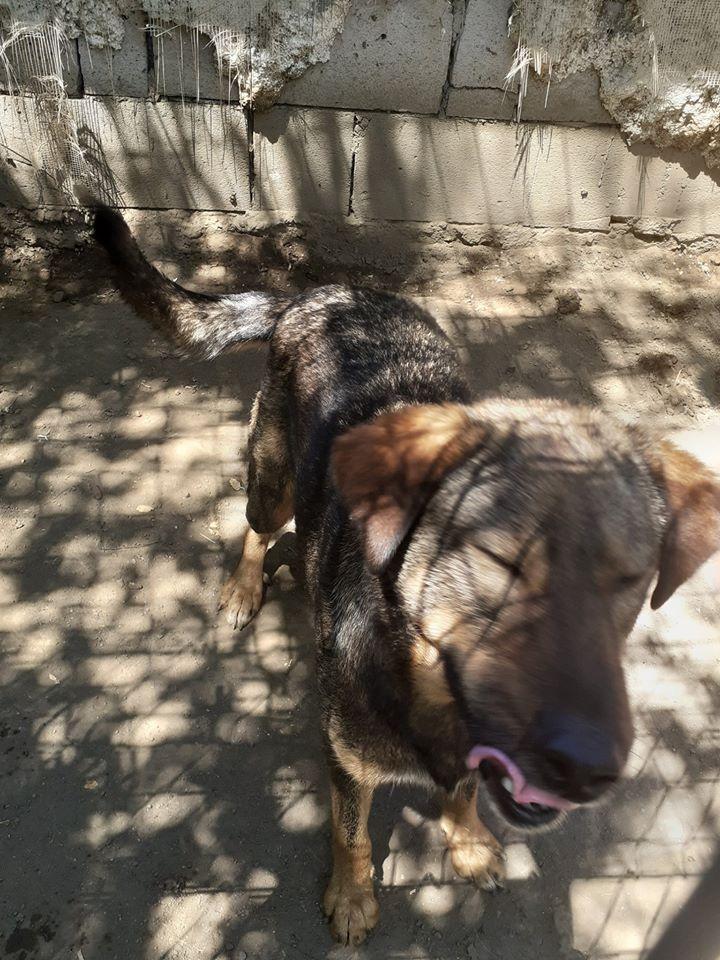 OUZO, né en sept 2017,  croisé berger, frère de Taliya et Nami, trouvé dans la rue en mai 2018 - Parrainé par Viviane -R- - Page 2 10881110