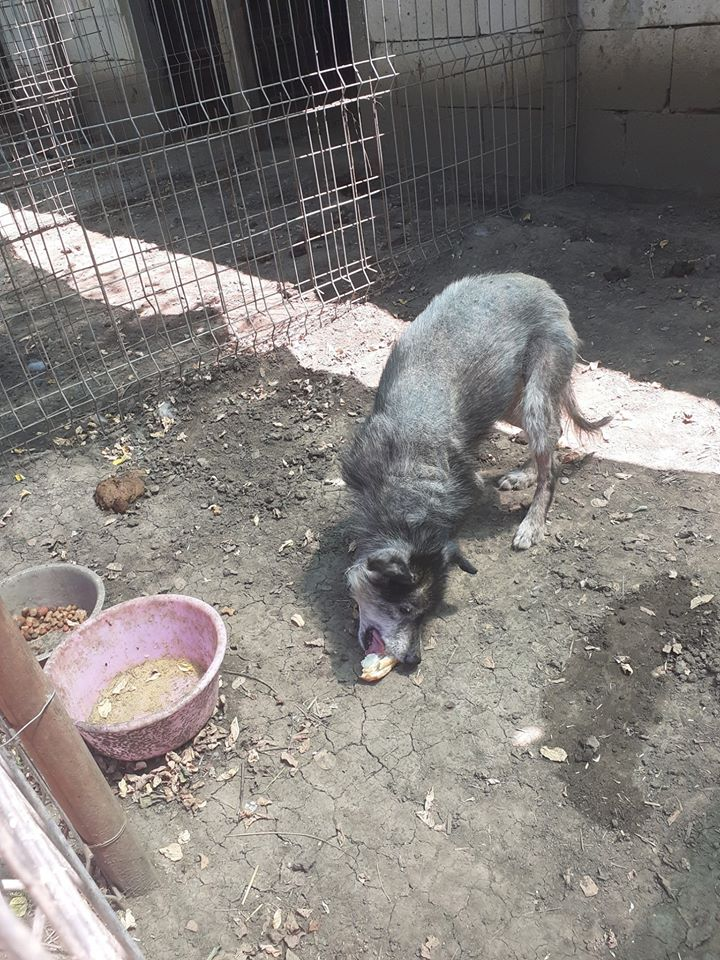grizie - GRIZIE - Taille moyenne - Femelle née le 10/08/2009 EN FA DANS LE 28 - Marrainée par Sabfly -R-SC- SOS 10951610