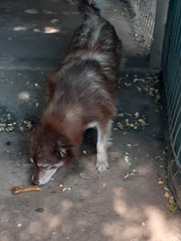 LAORA, femelle rescapée d'Oltenita du 30 avril 2015, née fin 2013, marron roux - marrainée par lilirez2 - SOS-R-SC - Page 3 11011010