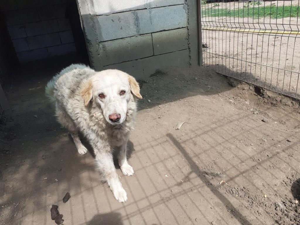 BALANUCH, mâle croisé berger sauvé de Pallady, né en 2009 parrainé par Nathalie G. -Gage Coeur  Myri_Bonnie-SC-R-SOS- - Page 3 11138512