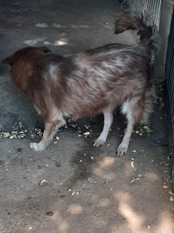 LAORA, femelle rescapée d'Oltenita du 30 avril 2015, née fin 2013, marron roux - marrainée par lilirez2 - SOS-R-SC - Page 3 11291510