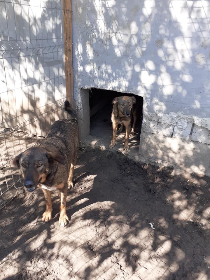 OUZO, né en sept 2017,  croisé berger, frère de Taliya et Nami, trouvé dans la rue en mai 2018 - Parrainé par Viviane -R- - Page 2 11897210