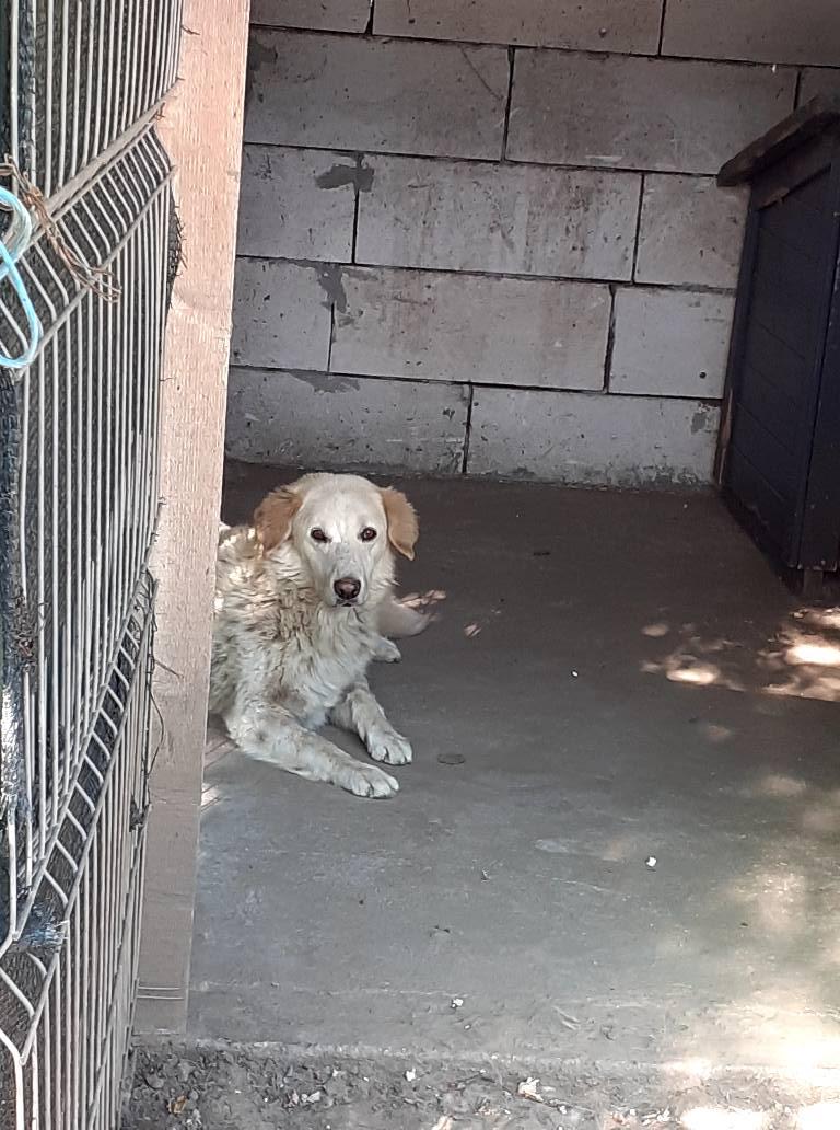 BALANUCH, mâle croisé berger sauvé de Pallady, né en 2009 parrainé par Nathalie G. -Gage Coeur  Myri_Bonnie-SC-R-SOS- - Page 3 11945512