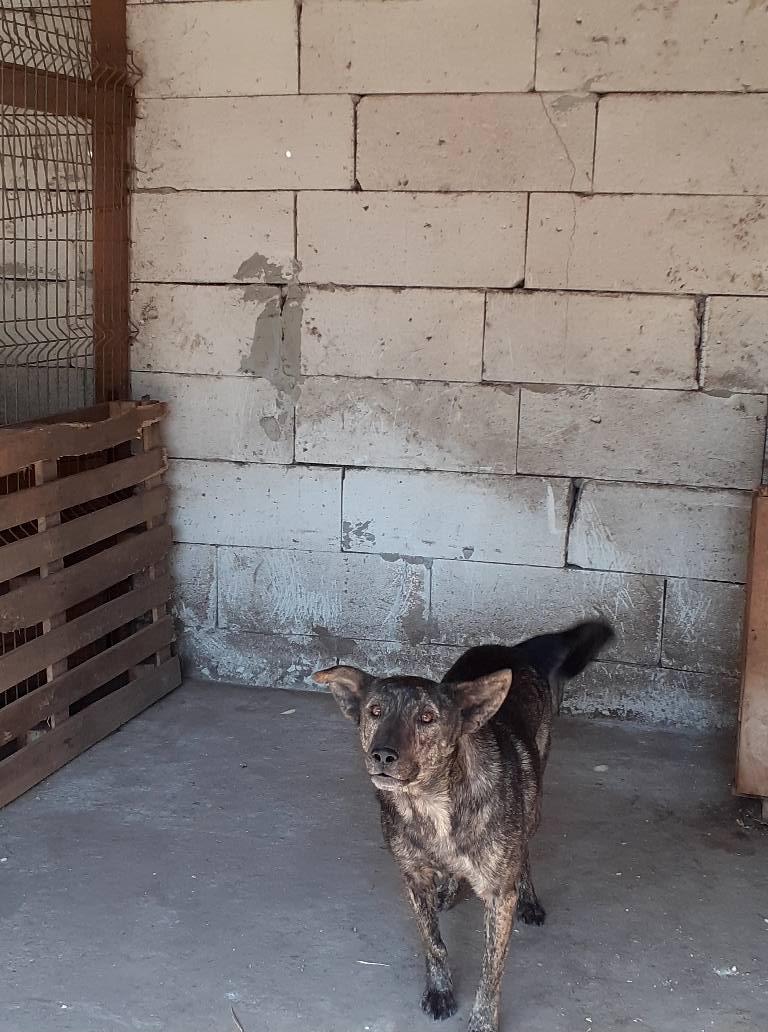 ARRY, mâle né en 2013, récupéré suite à l'avis d'expulsion du refuge de Radu- marrainé par Bouffy-R-SC-SOS 11946010