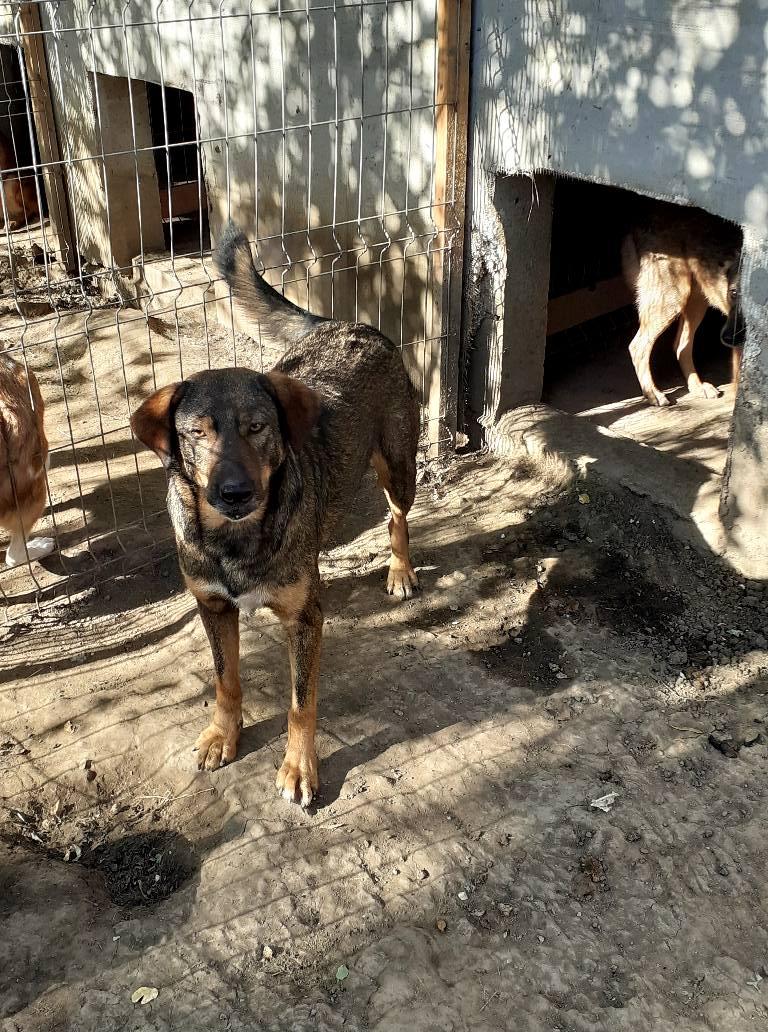 OUZO, né en sept 2017,  croisé berger, frère de Taliya et Nami, trouvé dans la rue en mai 2018 - Parrainé par Viviane -R- - Page 2 11948710