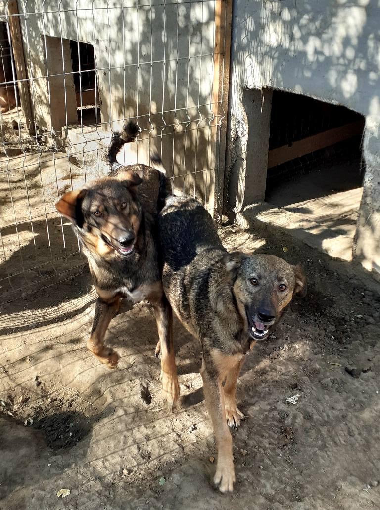 OUZO, né en sept 2017,  croisé berger, frère de Taliya et Nami, trouvé dans la rue en mai 2018 - Parrainé par Viviane -R- - Page 2 11951012