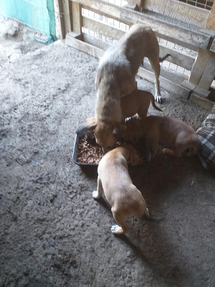 Manisha - MANISHA née en 2018 - maman et ses 3 chiots sauvés de Mihailesti le 20/08/2020 - parrrainée par Coco65-R-SC-SOS 11994313