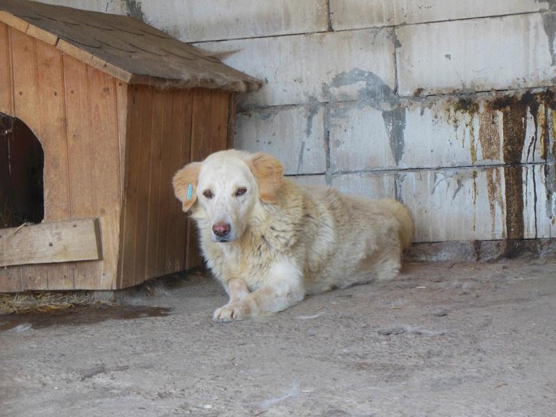 BALANUCH, mâle croisé berger sauvé de Pallady, né en 2009 parrainé par Nathalie Gamblin-Gage Coeur  Myri_Bonnie-SC-R-SOS- - Page 2 1241010