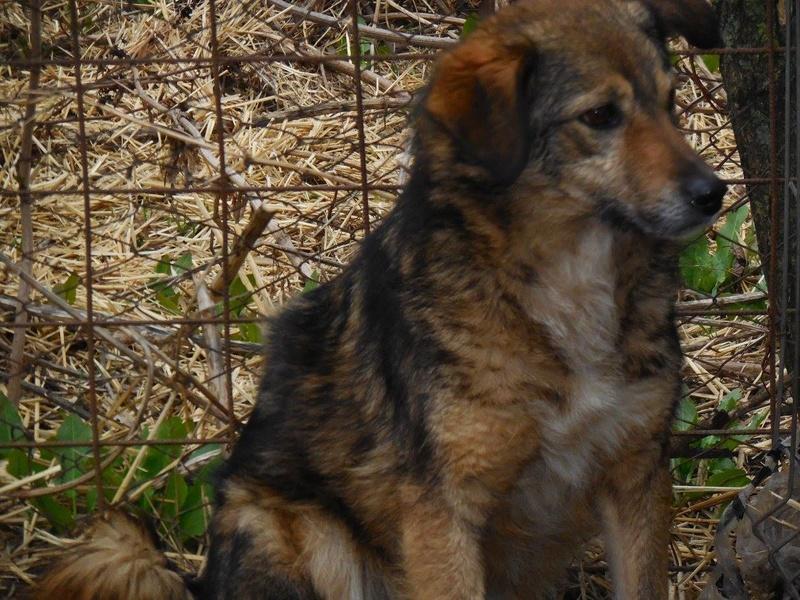 TIPPI - Très jolie femelle X berger poils mi-longs - née en 2009 - parrainée par Edni94 - R-SC- SOS - Page 3 17358512