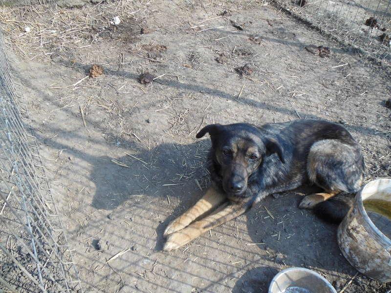 TINNA,  née en 2012 trouvée dans la rue par Lenuta - marrainée par lilirez02 -R-SC 1911010