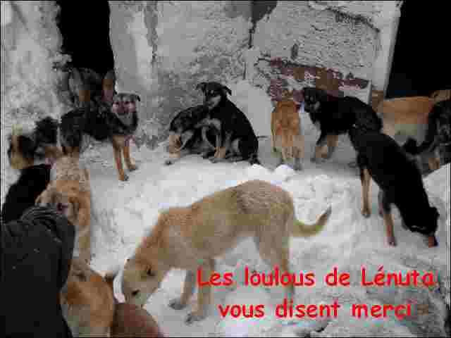 CAGNOTTE FRAIS VETERINAIRE POUR LES LOULOUS DU REFUGE - Page 10 1ed64610