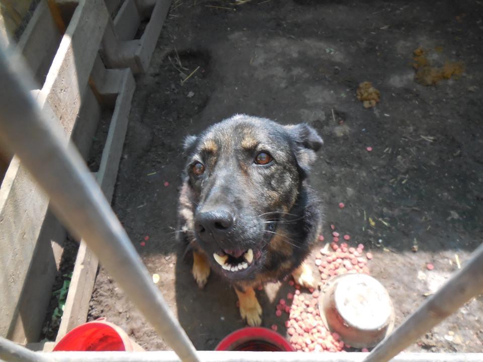 TINNA,  née en 2012 trouvée dans la rue par Lenuta - marrainée par lilirez02 -R-SC 38614910