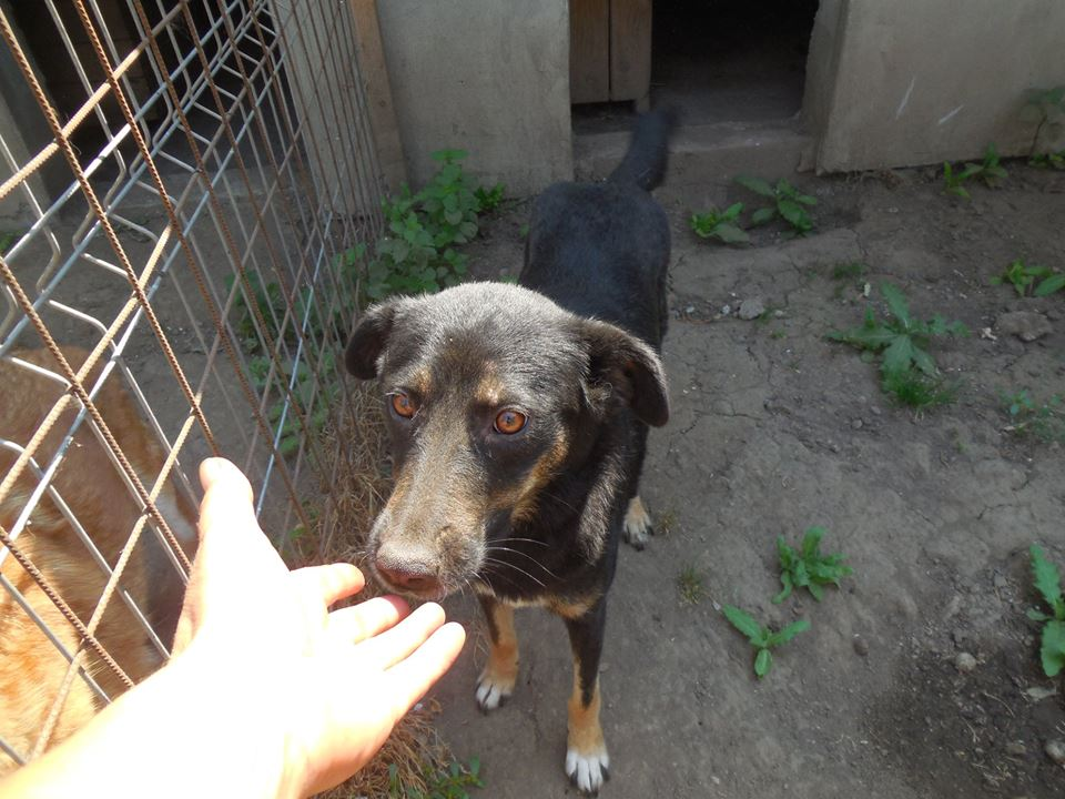 TINNA,  née en 2012 trouvée dans la rue par Lenuta - marrainée par lilirez02 -R-SC 39521810