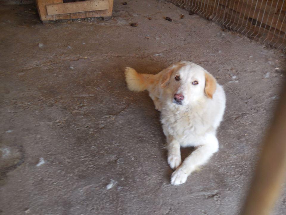 BALANUCH, mâle croisé berger sauvé de Pallady, né en 2009 parrainé par Nathalie Gamblin-SC-R-SOS- - Page 2 39543610