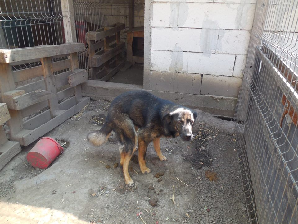 TINNA,  née en 2012 trouvée dans la rue par Lenuta - marrainée par lilirez02 -R-SC 39664810