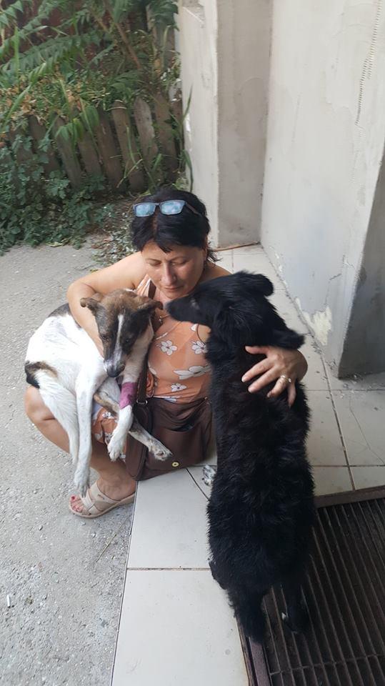 DRAKE, noir et blanc, né en NOV 2017, portée de Naola trouvé enfermé dans un sac-marrainé par Marine M. - R-SC-SOS- 40796511