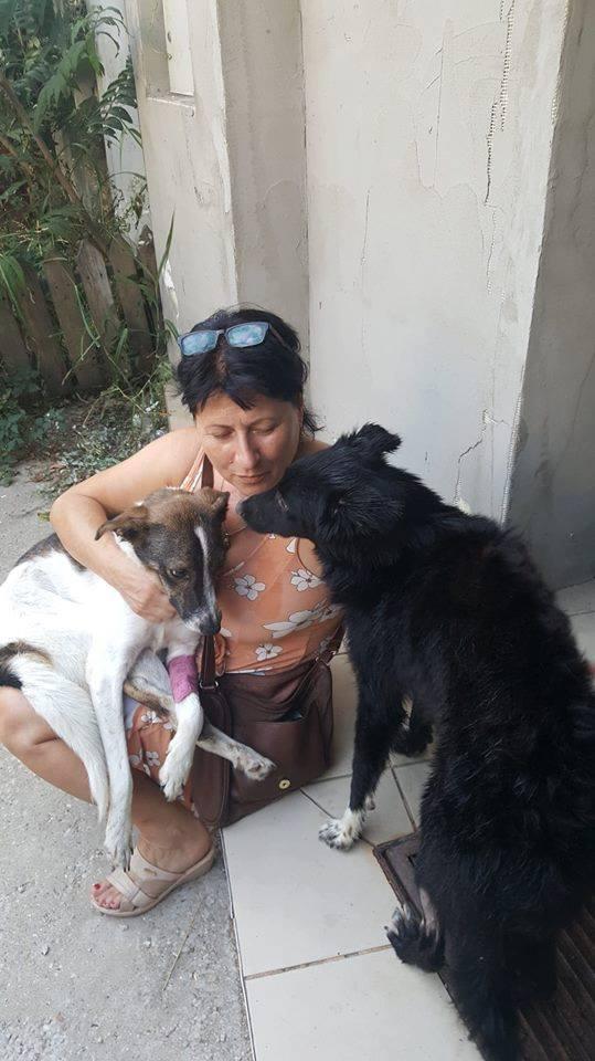 DRAKE, noir et blanc, né en NOV 2017, portée de Naola trouvé enfermé dans un sac-marrainé par Marine M. - R-SC-SOS- 40854011