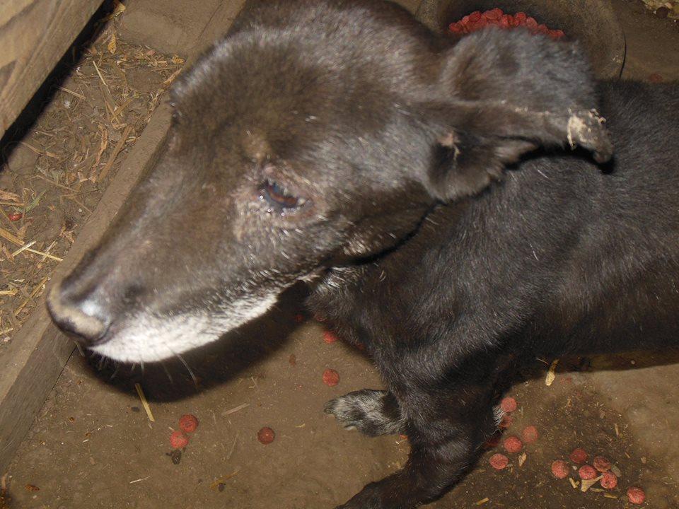 BLACHI, ratier, né en 2004 PARRAINE PAR LAIRO - FB - LBC- SOS -SC- AS - Page 7 41682211