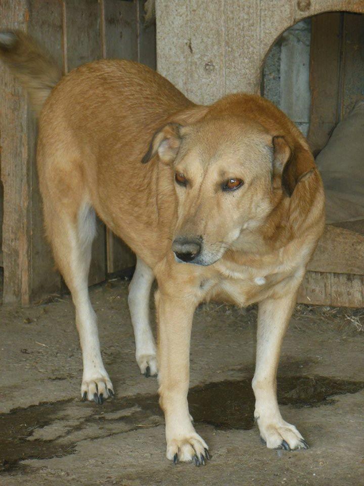 BAILEYS, née en 2011, sauvée de l'équarrissage - parrainée par Nathalie -SOS-R-SC - Page 3 41685413