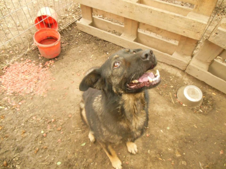 TINNA,  née en 2012 trouvée dans la rue par Lenuta - marrainée par lilirez02 -R-SC 41709910