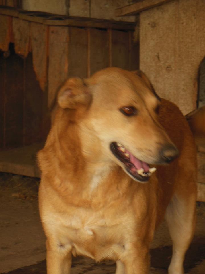 BAILEYS, née en 2011, sauvée de l'équarrissage - parrainée par Nathalie -SOS-R-SC - Page 3 41758810