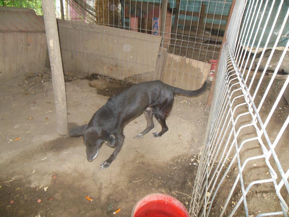 BLACHI, ratier, né en 2004 PARRAINE PAR LAIRO - FB - LBC- SOS -SC- AS - Page 7 41781710