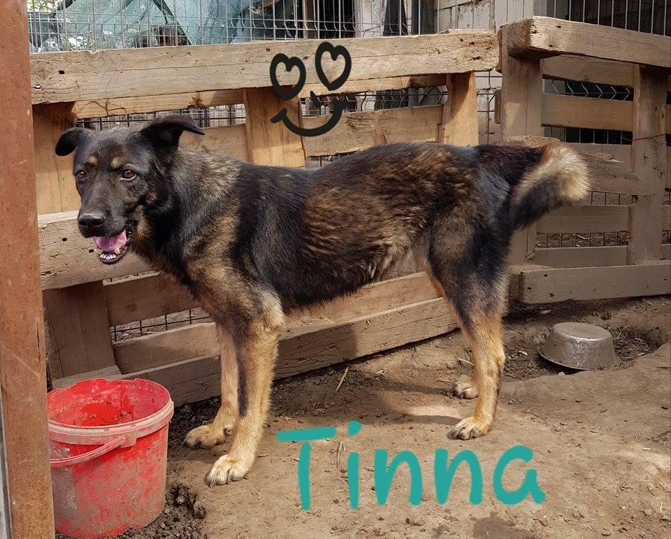 TINNA,  née en 2012 trouvée dans la rue par Lenuta - marrainée par lilirez02 -R-SC 41897910