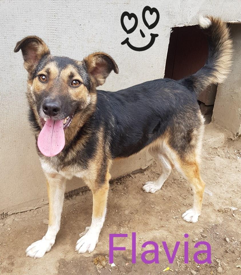 FLAVIA, femelle, couleur charbonnée, née en sept 2016 (chiot d'AKELA) - Famille sauvée par Lenuta dans un champ- PARRAINEE PAR NATHALIE GAMBLIN R-SOS- 42045112