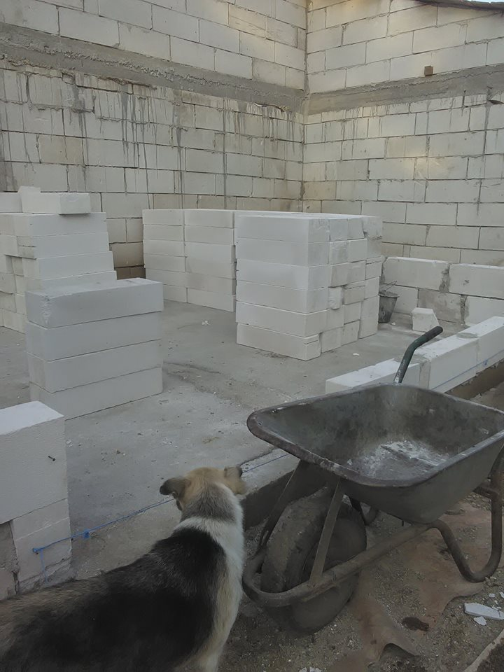 CONSTRUCTION D'UNE PIECE POUR LES CHIENS EN LIBERTE 42299110