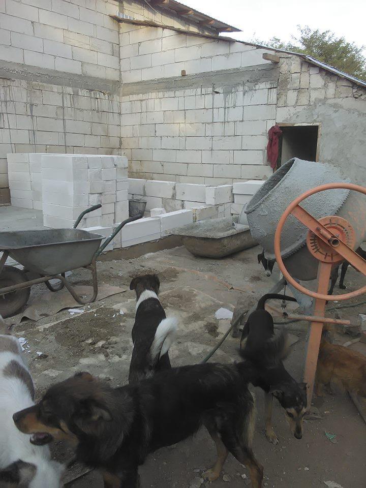 CONSTRUCTION D'UNE PIECE POUR LES CHIENS EN LIBERTE 42319710