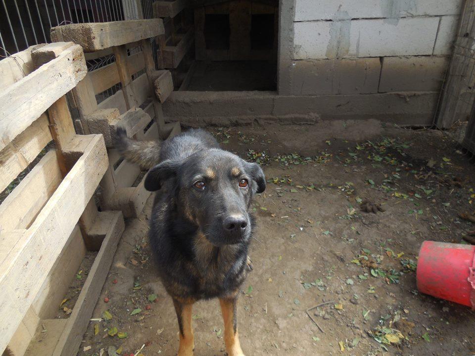TINNA,  née en 2012 trouvée dans la rue par Lenuta - marrainée par lilirez02 -R-SC 42870010