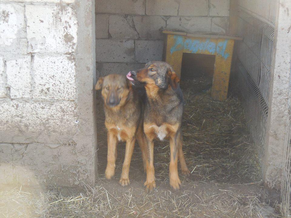 OUZO, né en sept 2017,  croisé berger, frère de Taliya et Nami, trouvé dans la rue en mai 2018 - Parrainé par Viviane -R- 48423810