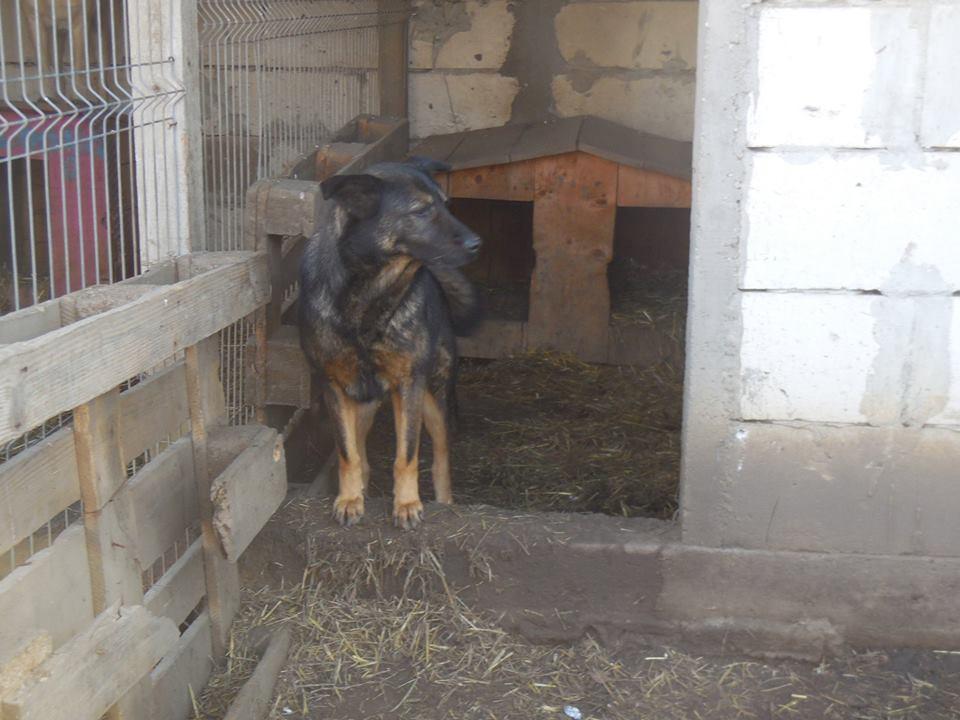 TINNA,  née en 2012 trouvée dans la rue par Lenuta - marrainée par lilirez02 -R-SC 48428010