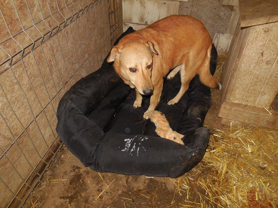 BAILEYS, née en 2011, sauvée de l'équarrissage - parrainée par Nathalie -SOS-R-SC - Page 3 49898610