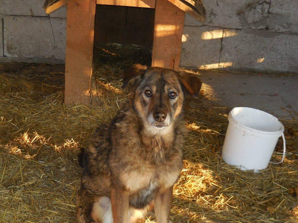 NENIA - Femelle - née en 2009   - Parrainée par Yemtsi et Nanou R-SOS-SC - Page 3 49946810