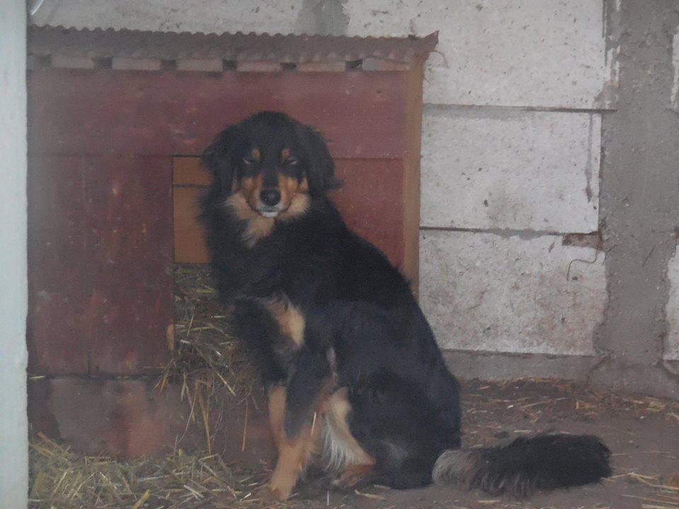 BACCARAT, mâle né en 2014, race commune noir et feu, sauvé en mars 2017 - parrainé par Toffee - R- 50117110