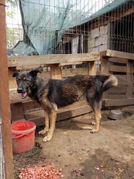 TINNA,  née en 2012 trouvée dans la rue par Lenuta - marrainée par lilirez02 -R-SC 50307011