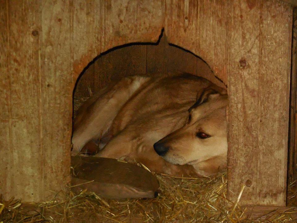 BAILEYS, née en 2011, sauvée de l'équarrissage - parrainée par Nathalie -SOS-R-SC - Page 3 51679310