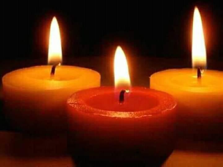 GINGER NEE LE 14/02/2016 Sauvée avec ses 4 chiots (tous décédés) EN FA DANS LE 60 - marrainée par Alexandra B. R-SOS-SC-30MA 52422212