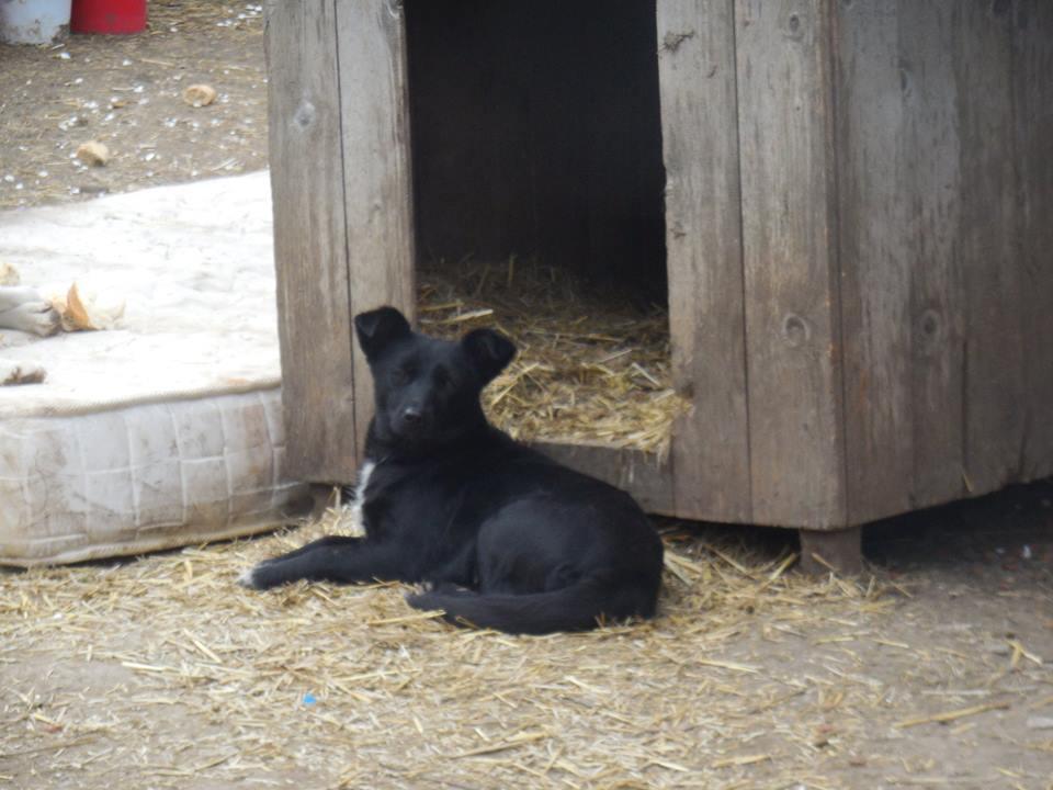 LIZZY - petite femelle noire née le 15/08/2017, sortie de l'équarrissage le 21/11/2018 EN FA DANS LE 51 Marrainée par Martine M- R-SC-SOS 53246810